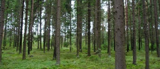 skog-i-lettland